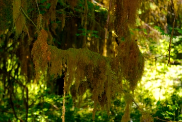 ONP, Hoh Rainforest_9, Jul 2010, by JMGatlin