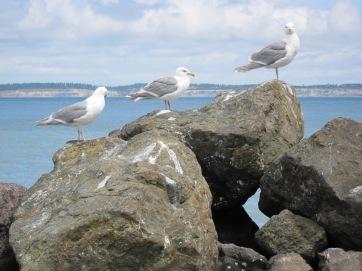 Seagulls, Port Townsend, by JMGatlin, 2010