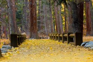 Sequoia Bridge 2006 by JMGatlin