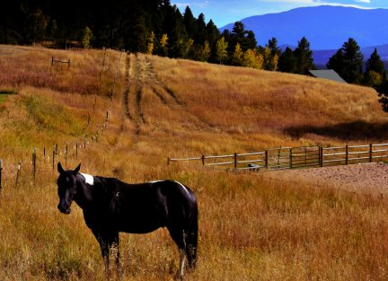 Spirit Valley Horse, Sept 2015, Conifer, CO, LAN1027, by JMGatlin